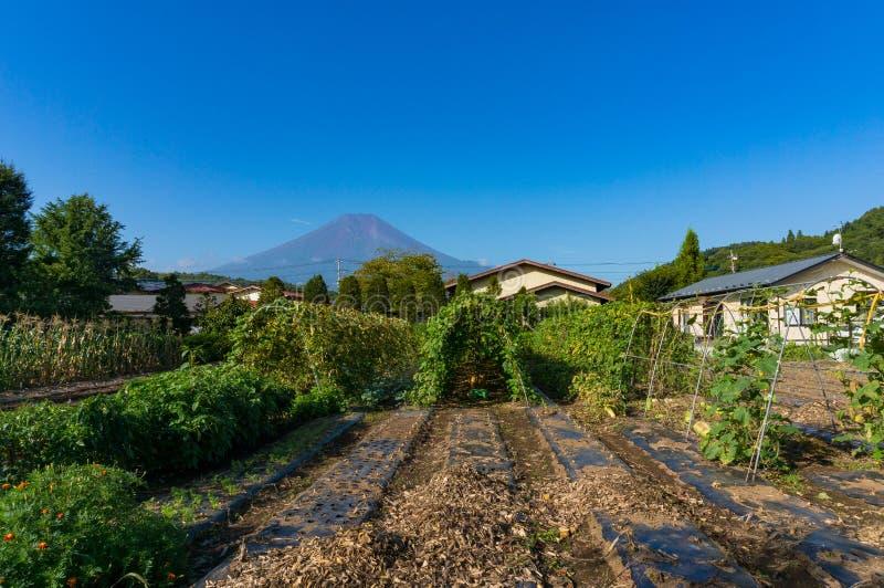 Japoński wsi gospodarstwo rolne z widokiem góra Fuji zdjęcia stock