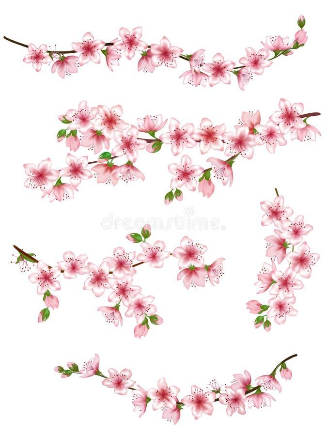 Japońskie gałąź ustawiająca wiśni wektorowa ilustracja ilustracja wektor