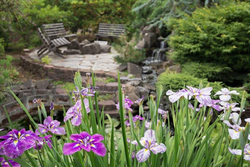 Download Japońscy irysy zdjęcie stock. Obraz złożonej z irys, skała - 41953062