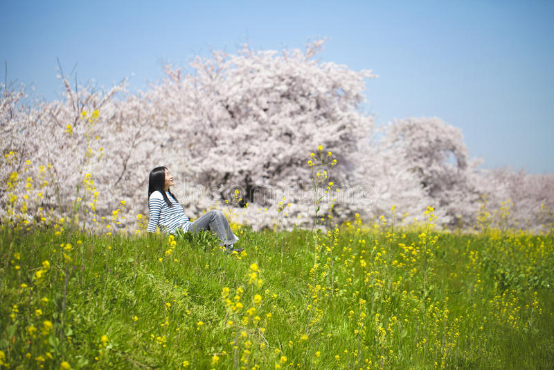 Japonês Cherry Blossom fotografia de stock