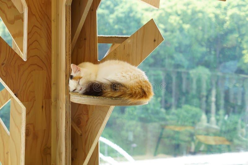Japonês Nap Cat imagem de stock