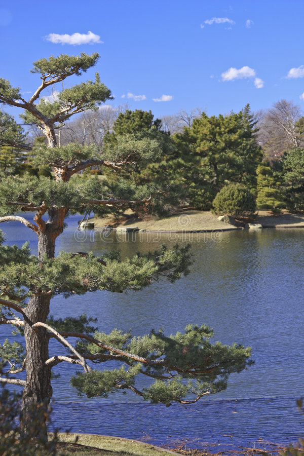 Japonais de jardin photographie stock libre de droits