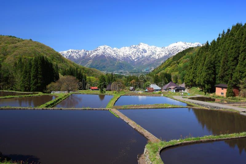 Japonia Alps i tarasowy irlandczyka pole fotografia royalty free