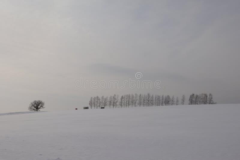 Japonia hokkaido Biei w zimie fotografia stock