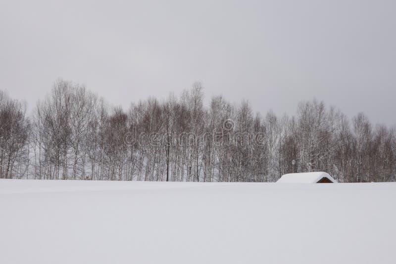 Japonia hokkaido Biei w zimie obraz royalty free
