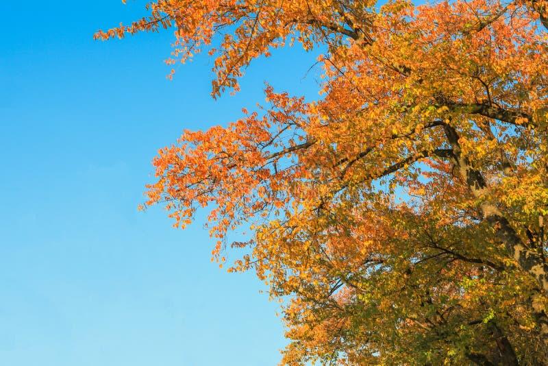 Japonia jesień Nagano prefektura, Japonia obrazy stock