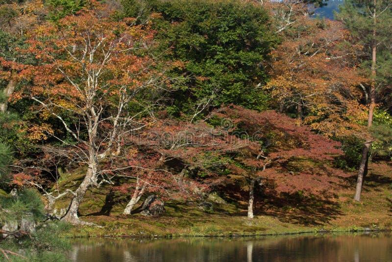 Japonia, Kinki region, Kyoto prefektura, Kyoto miasto, Tenryu-ji Tem zdjęcie royalty free