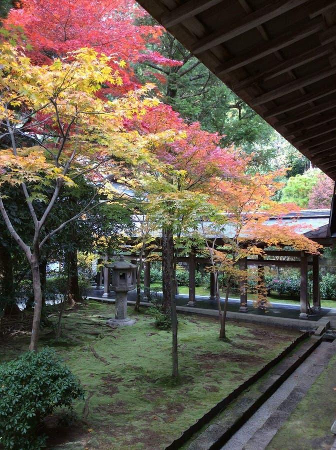 Japonia park zdjęcia stock