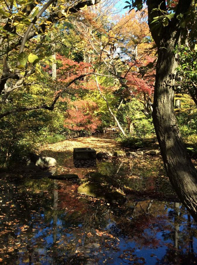 Japonia, park, jesień obraz stock
