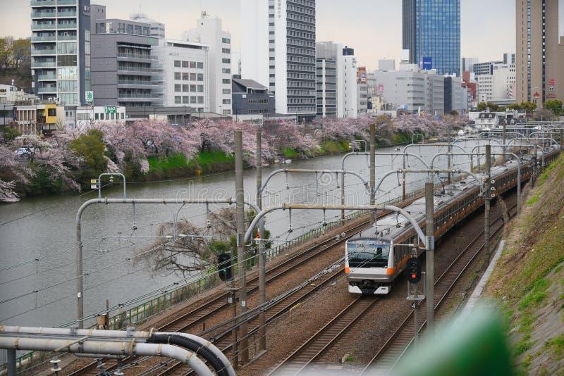 Japonia poręcza pociąg Sakura w Tokio kwiaty i Czereśniowego okwitnięcia drzewa i zdjęcie royalty free