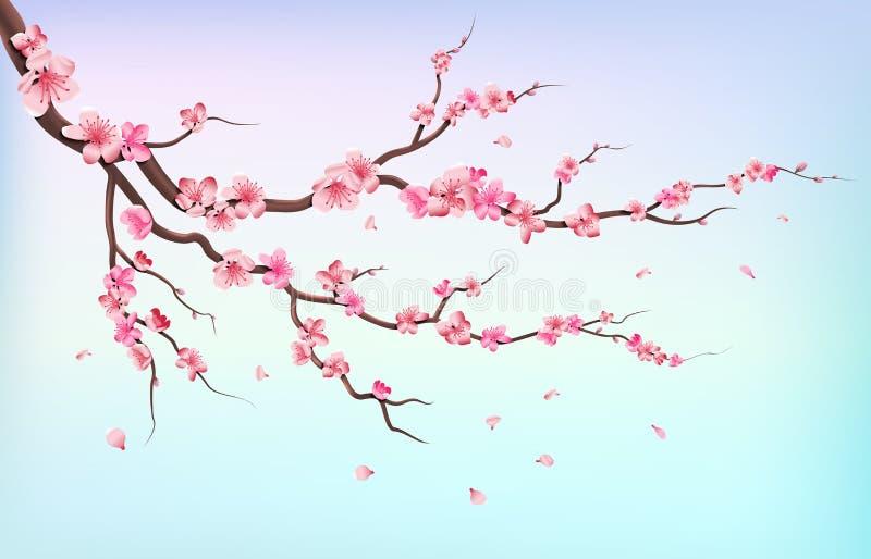 Japonia Sakura gałąź z czereśniowego okwitnięcia kwiatami i spada płatkami odizolowywającymi na białej tło wektoru ilustraci ilustracja wektor