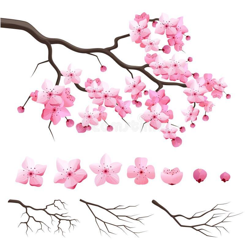 Japonia Sakura wiśni gałąź z kwitnienie kwiatami ilustracja wektor