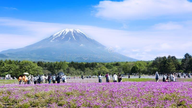 Japonia Shibazakura festiwal z polem różowy mech Sakura fotografia stock