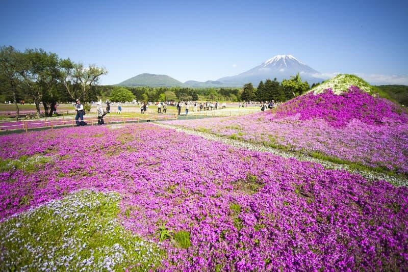 Japonia Shibazakura festiwal z polem różowy mech Sakura obrazy stock