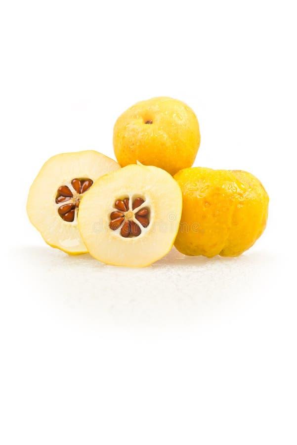 Japonica do Chaenomeles Frutos amarelos dourados de florescência japoneses do marmelo em um fundo branco foto de stock