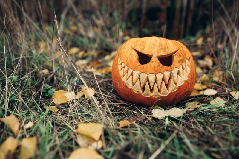 Jaque-o-lanterna de Dia das Bruxas com a cara de sorriso antropomorfic nas folhas de outono exteriores imagem de stock