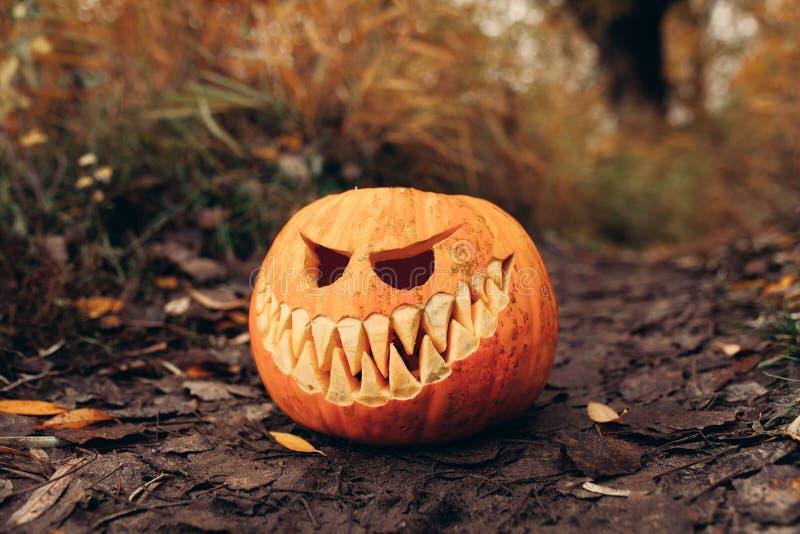 Jaque-o-lanterna de Dia das Bruxas com a cara de sorriso antropomorfic nas folhas de outono exteriores imagens de stock