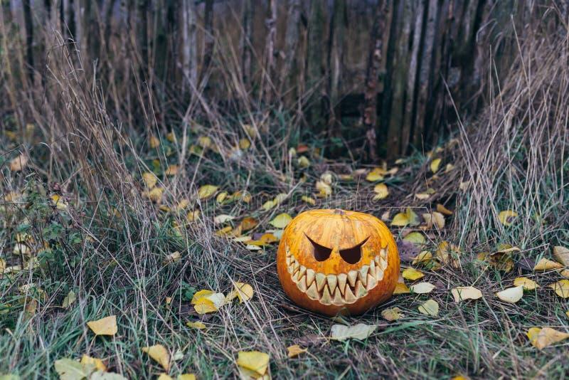 Jaque-o-lanterna de Dia das Bruxas com a cara de sorriso antropomorfic nas folhas de outono exteriores fotos de stock