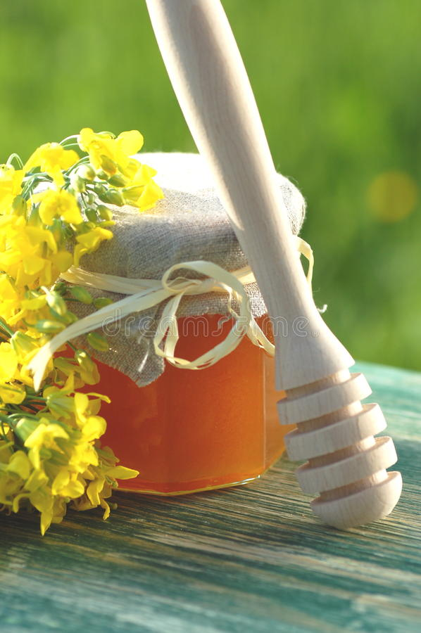 Jar of delicious honey with rapeseed flowers and honey dipper. Jar of delicious honey with rapeseed flowers and a honey dipper stock photo