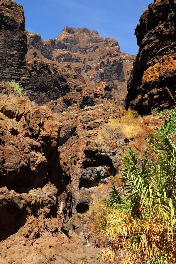 Jar Masca przy Tenerife obrazy stock