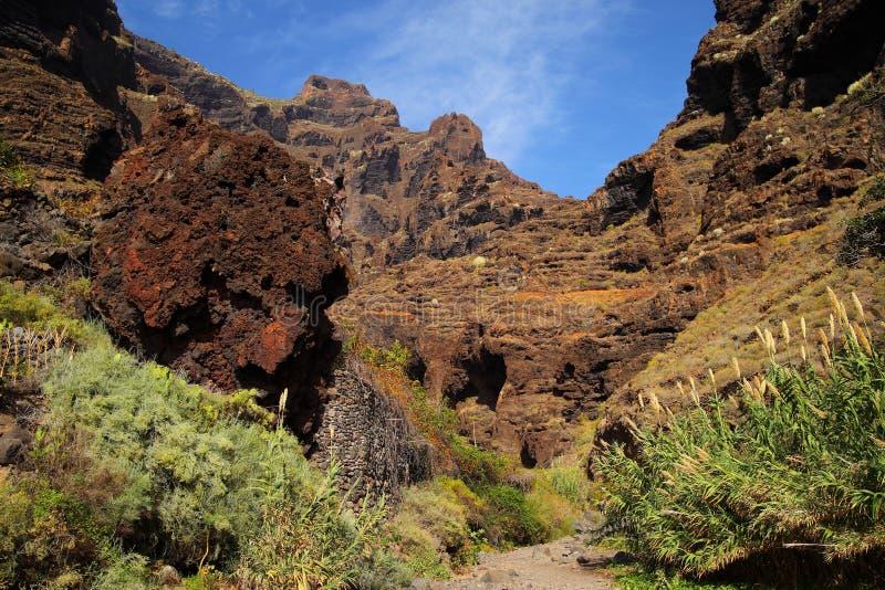 Jar Masca przy Tenerife zdjęcie stock