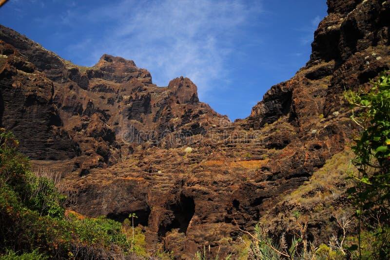 Jar Masca przy Tenerife obraz stock