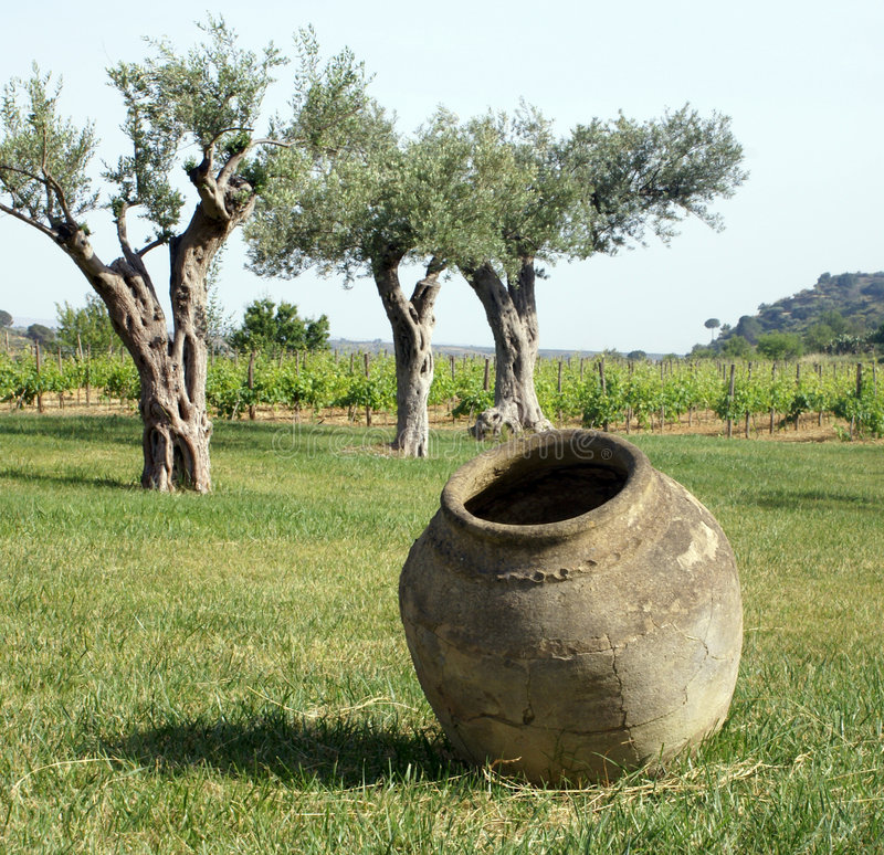 jar roślin o amphorze wina fotografia stock