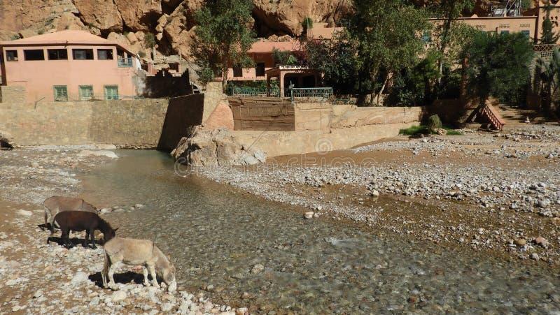 Jar w Maroc z osłami przy rzeką zdjęcia royalty free