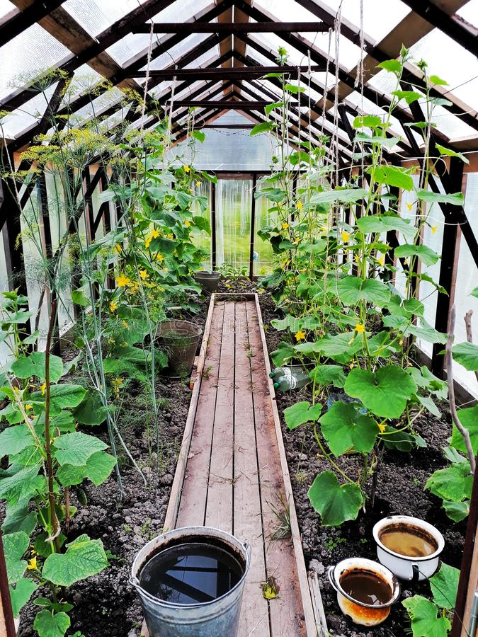 Jardín 2 fotografía de archivo