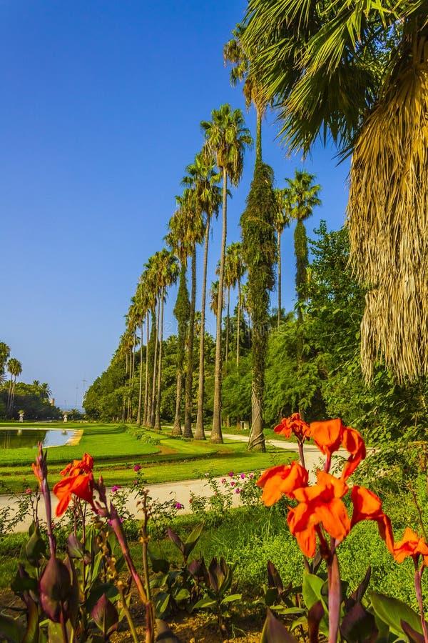 Download Jardín foto de archivo. Imagen de exótico, árbol, argel - 42428426