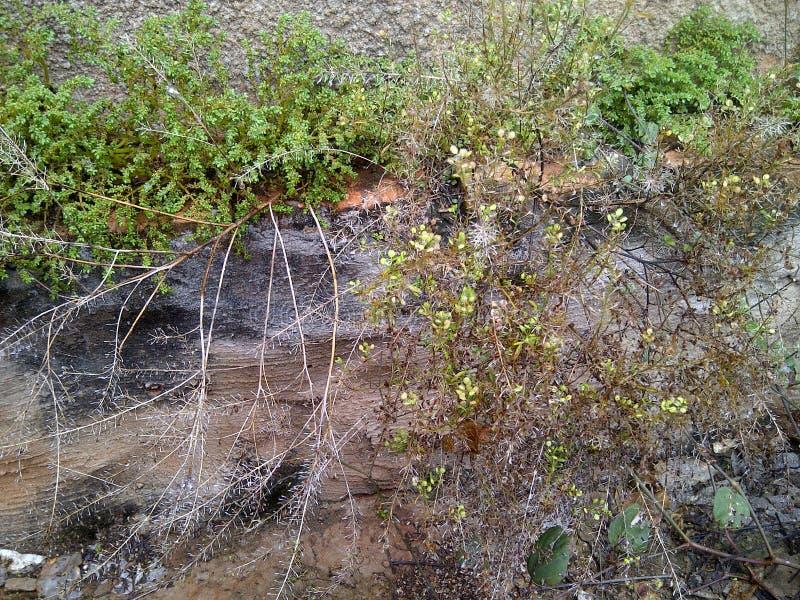 Jardín abandonado, ramas secas y malas hierbas foto de archivo
