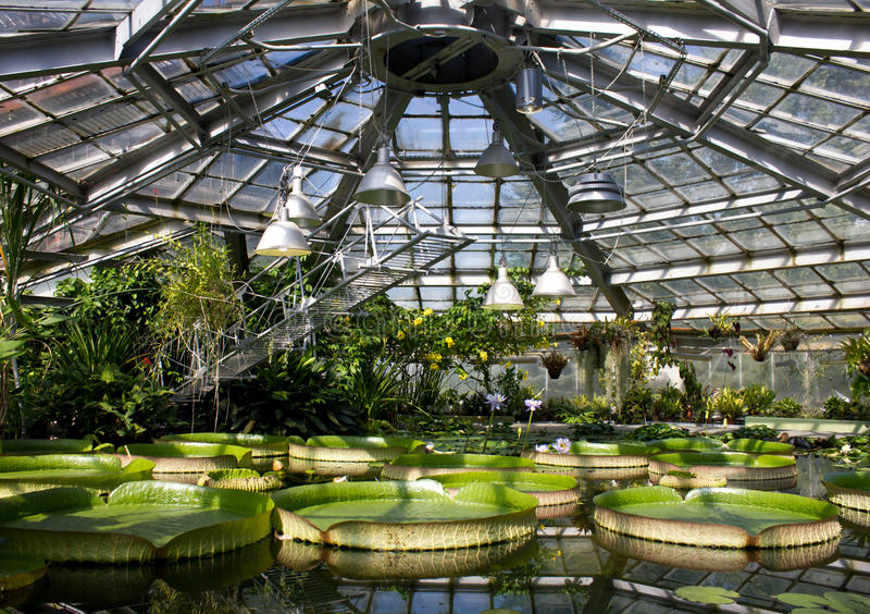 Jardín acuático en la luz del sol con diversa especie de planta de agua Lirios de agua, Victoria Amazonica, jacinto de agua imagen de archivo libre de regalías