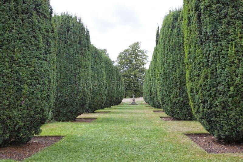 Jardín ajardinado formal con las plantas del tejo del topiary del cono imágenes de archivo libres de regalías