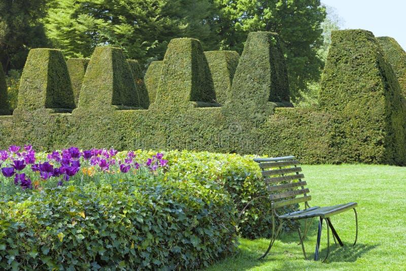 Jardín ajardinado inglés con el seto del topiary, tulipanes imagenes de archivo