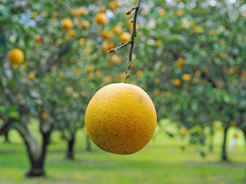 Jardín anaranjado fotografía de archivo