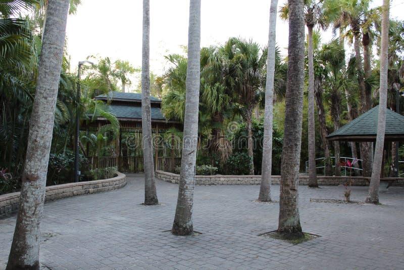 Jardín botánico, área pavimentada en el Instituto de Tecnología de la Florida, Melbourne la Florida imagenes de archivo