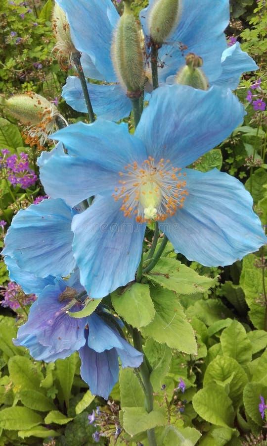 Jardín botánico 3 foto de archivo libre de regalías