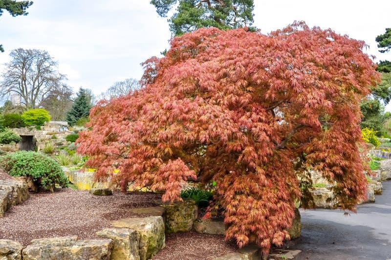Jardín botánico de Kew en la primavera, Londres, Reino Unido imágenes de archivo libres de regalías