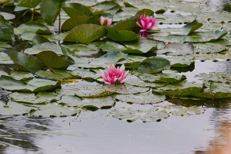 Jardín botánico del pintor Monet en Giverny, Francia fotografía de archivo libre de regalías