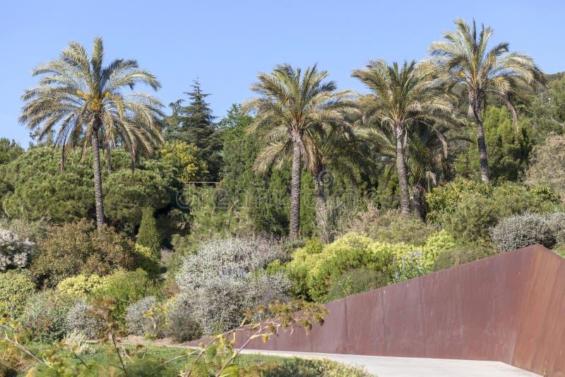 Jardín botánico en el parque de Montjuic, Barcelona imagenes de archivo