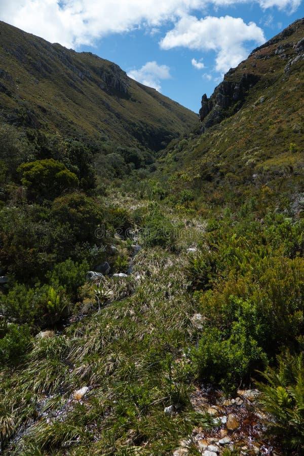 Jardín botánico en Suráfrica fotos de archivo