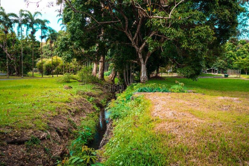 Jardín botánico Pamplemousses, Mauricio fotos de archivo
