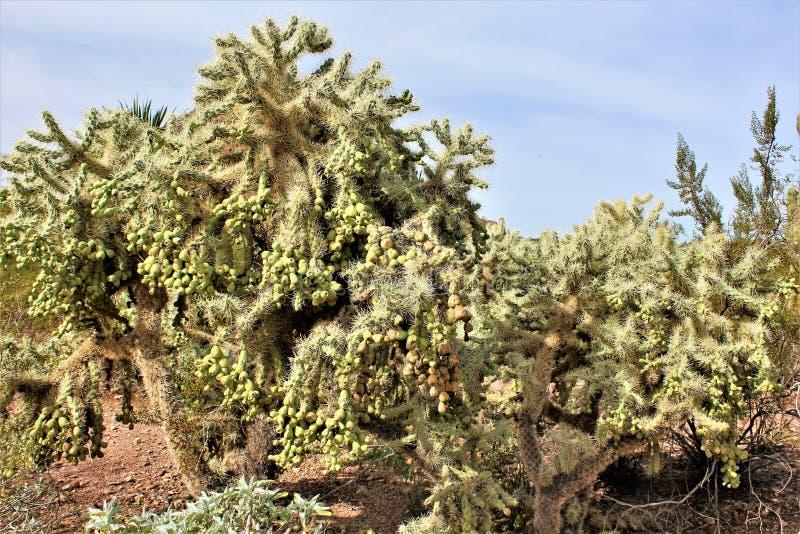 Jardín botánico Phoenix, Arizona, Estados Unidos del desierto imagenes de archivo