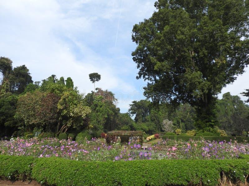 Jardín botánico real en Kandy, Sri Lanka, flora verde en un día soleado claro imagenes de archivo
