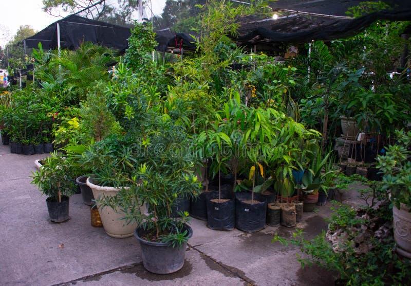 Jardín botánico verde y limpio imagenes de archivo