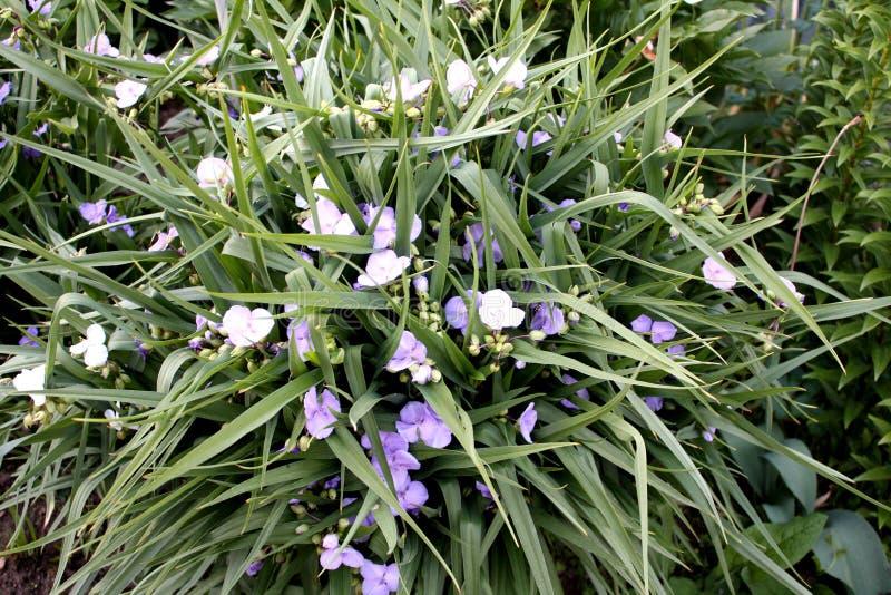 Jardín Campo del jardín Florecimiento de la primavera fotografía de archivo