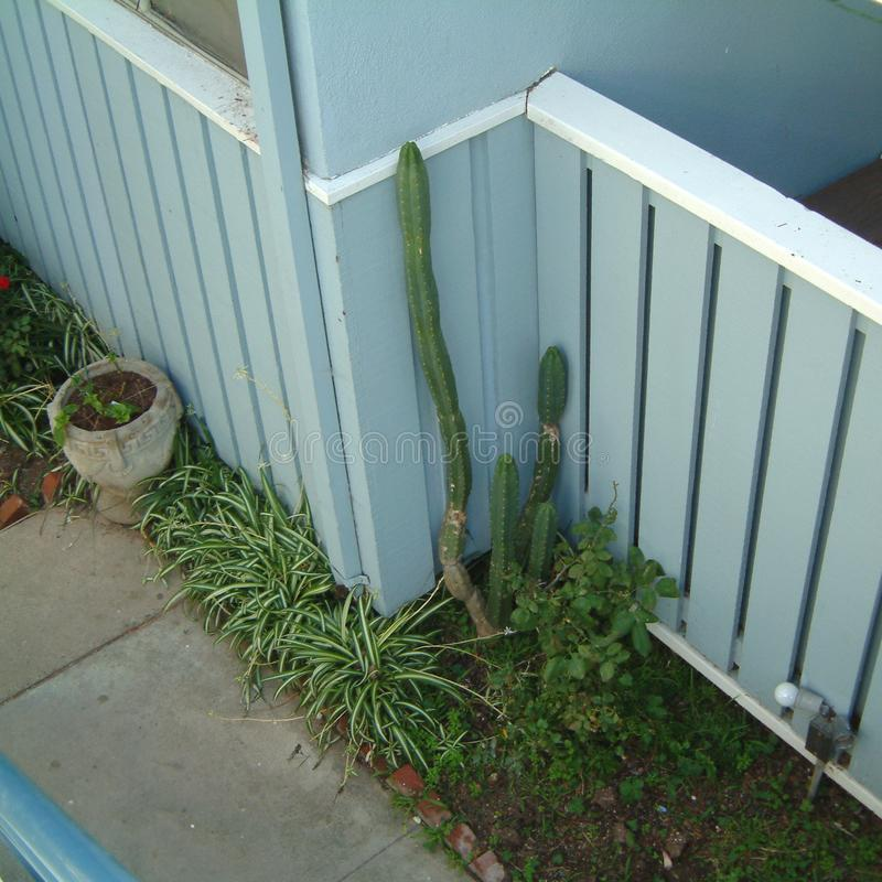 Jardín con el cactus imagen de archivo libre de regalías