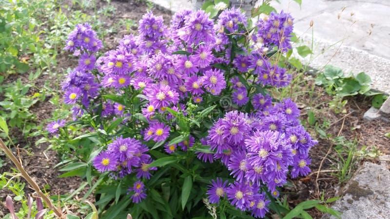 Jardín con las flores hermosas fotografía de archivo libre de regalías