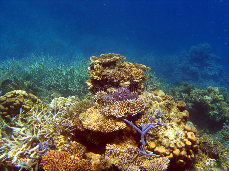 Jardín coralino en el filón de barrera fotos de archivo libres de regalías