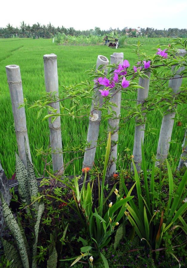 Jardín de Bali con los campos de bambú de la cerca y del arroz imágenes de archivo libres de regalías